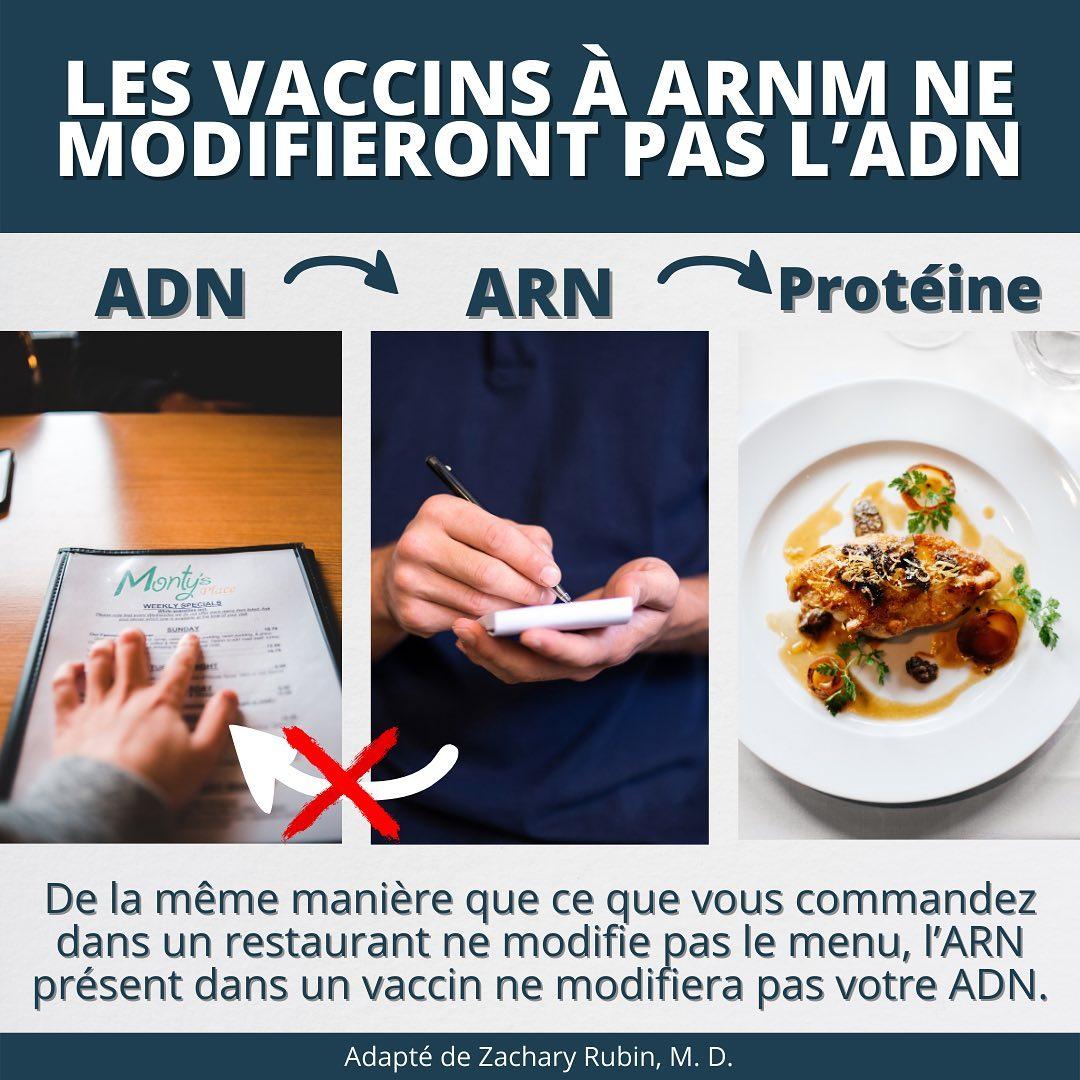 L'ARNm (comme les vaccins à ARNm Pfizer/BioNTech et Moderna) ne peut pas changer votre ADN.