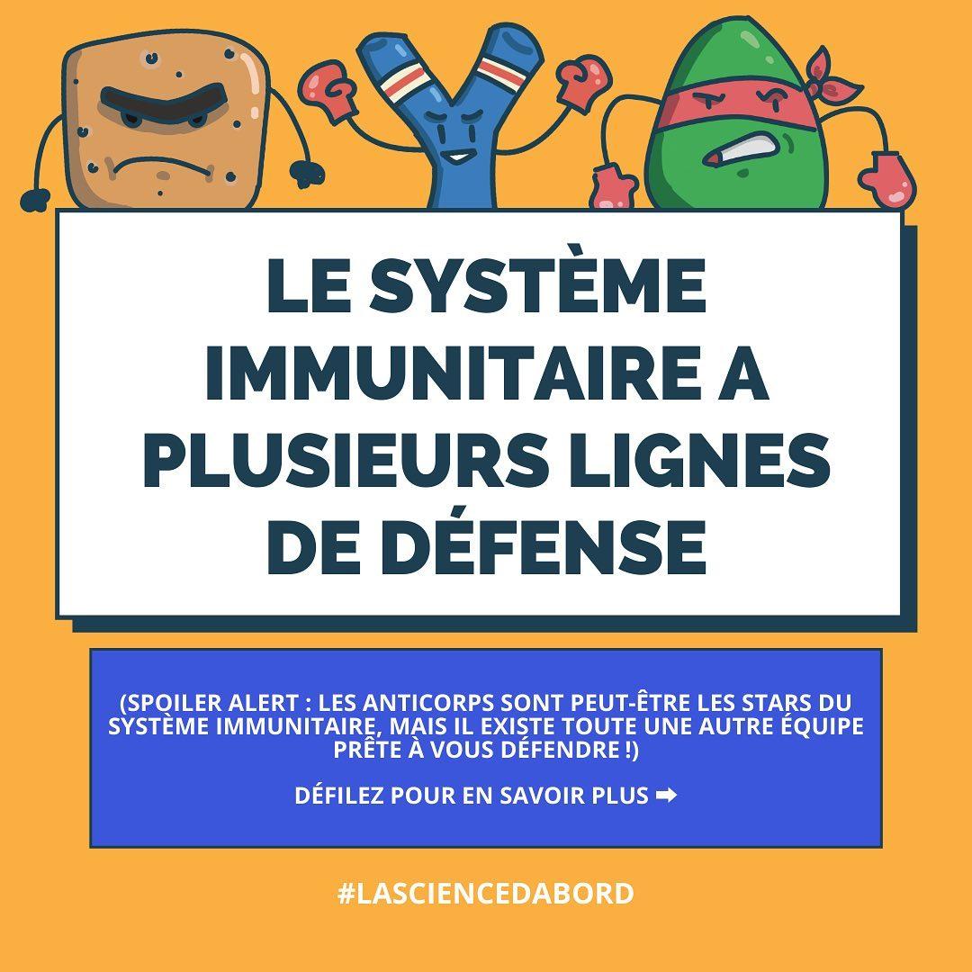 Le système immunitaire a plusieurs lignes de défense
